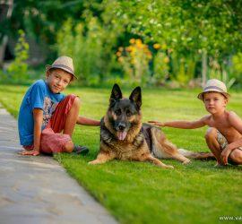 Дети играют с собаками: уморительное видео