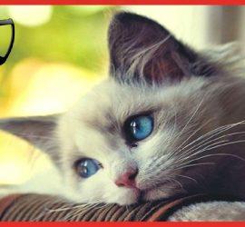 Кошка, ненавидящая пение