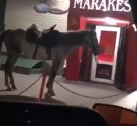 На коне с травматом: эпичная перестрелка в российском кафе