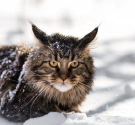 Названы любимые породы кошек в России (видео)