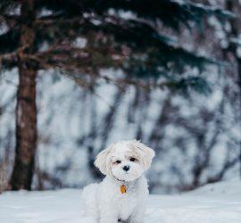 Минутка зимней радости: пес играет в снегу