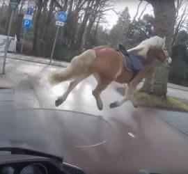 Сумасшедшая гонка: мужчина на мотоцикле помог женщине вернуть убегающего коня