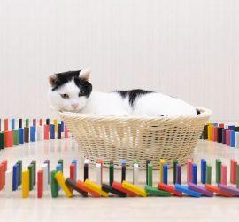 Японский блогер знакомит кошек с домино