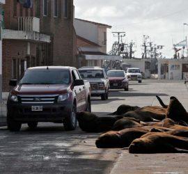В Аргентине на улицах города заметили морских львов