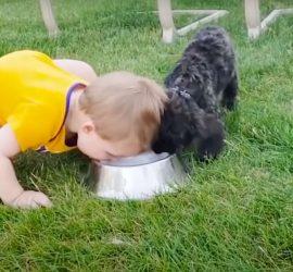 Милые малыши подурачились со своими собаками