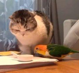 Бойцовый попугай показал четырехлапому, кто в доме хозяин