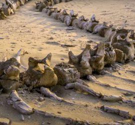 Ученые показали, что скрывается под песками Сахары
