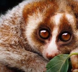 Топ самых опасных милых животных в мире
