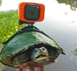 Блогер установил камеру GoPro на панцире черепахи