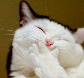 Самые смешные моменты с котами