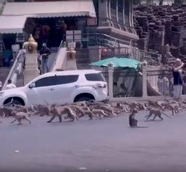 Армия голодных обезьян захватила город в Таиланде