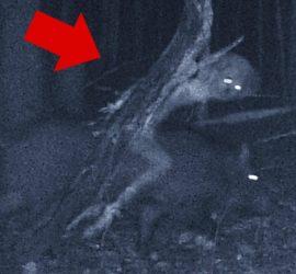 Подборка страшных вещей, которые происходили в лесу