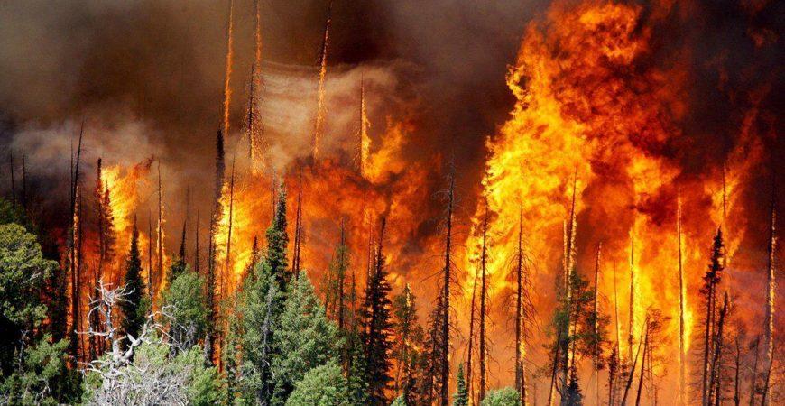 В Ростовской области разгорелся масштабный лесной пожар: есть жертвы