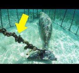 Жуткие вещи, обнаруженные дайверами на дне океана
