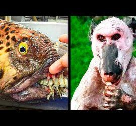 10 самых страшных животных в мире