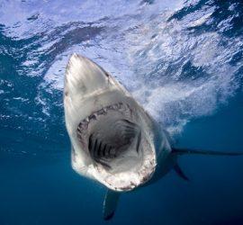 Жуткие кадры нападения акулы на серфера в Австралии