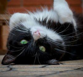 Невероятные факты о кошках