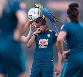 Дерзкий попугай едва не сорвал матч сборной Бразилии