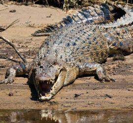 7 самых больших животных в Мире